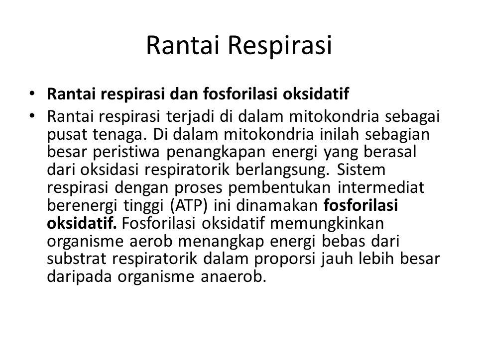 Rantai Respirasi Rantai respirasi dan fosforilasi oksidatif