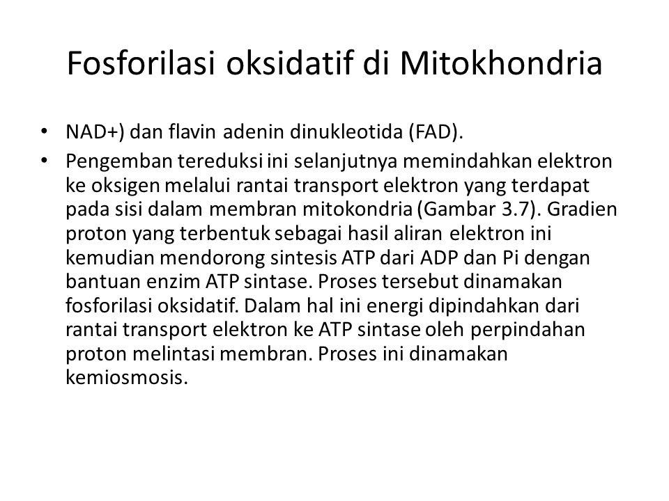 Fosforilasi oksidatif di Mitokhondria
