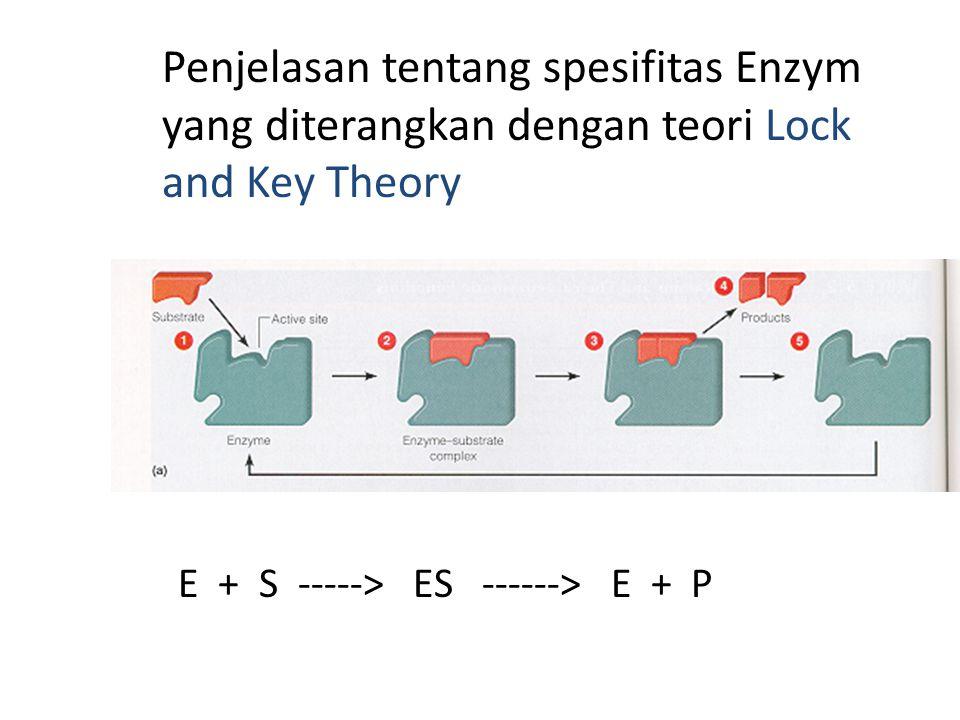 Penjelasan tentang spesifitas Enzym yang diterangkan dengan teori Lock and Key Theory