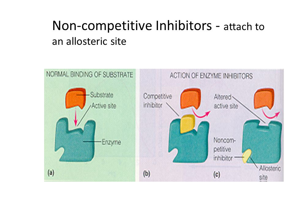Non-competitive Inhibitors - attach to an allosteric site