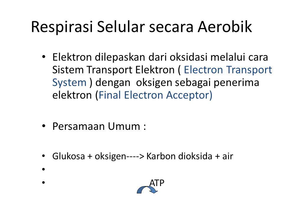 Respirasi Selular secara Aerobik