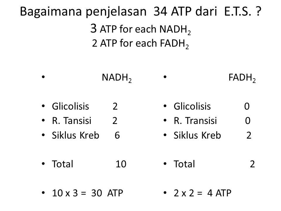 Bagaimana penjelasan 34 ATP dari E. T. S