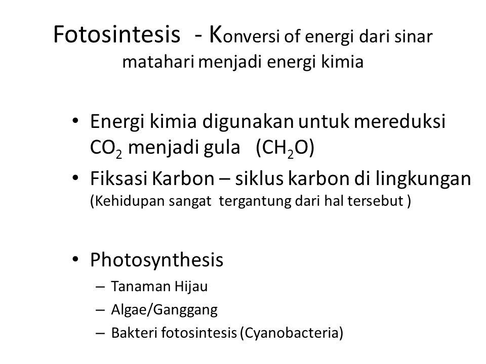 Fotosintesis - Konversi of energi dari sinar matahari menjadi energi kimia