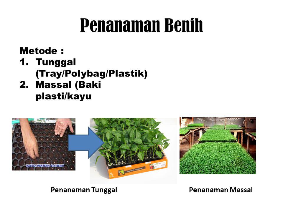 Penanaman Benih Metode : Tunggal (Tray/Polybag/Plastik)