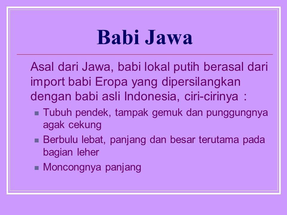 Babi Jawa Asal dari Jawa, babi lokal putih berasal dari import babi Eropa yang dipersilangkan dengan babi asli Indonesia, ciri-cirinya :