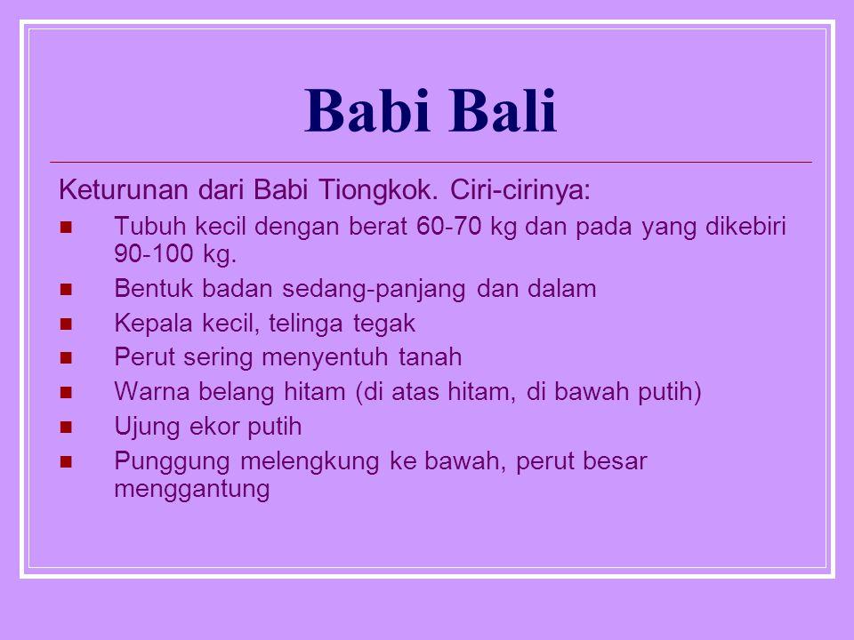 Babi Bali Keturunan dari Babi Tiongkok. Ciri-cirinya: