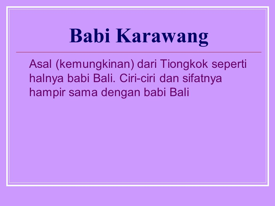 Babi Karawang Asal (kemungkinan) dari Tiongkok seperti halnya babi Bali.