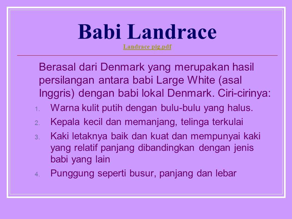 Babi Landrace Landrace pig.pdf