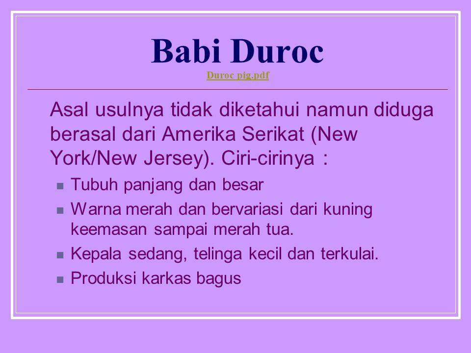 Babi Duroc Duroc pig.pdf