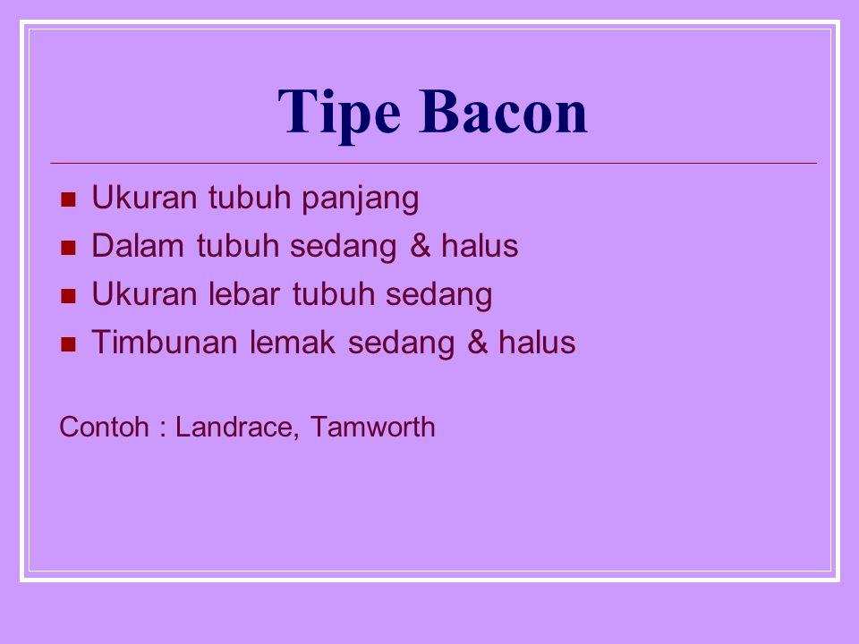 Tipe Bacon Ukuran tubuh panjang Dalam tubuh sedang & halus