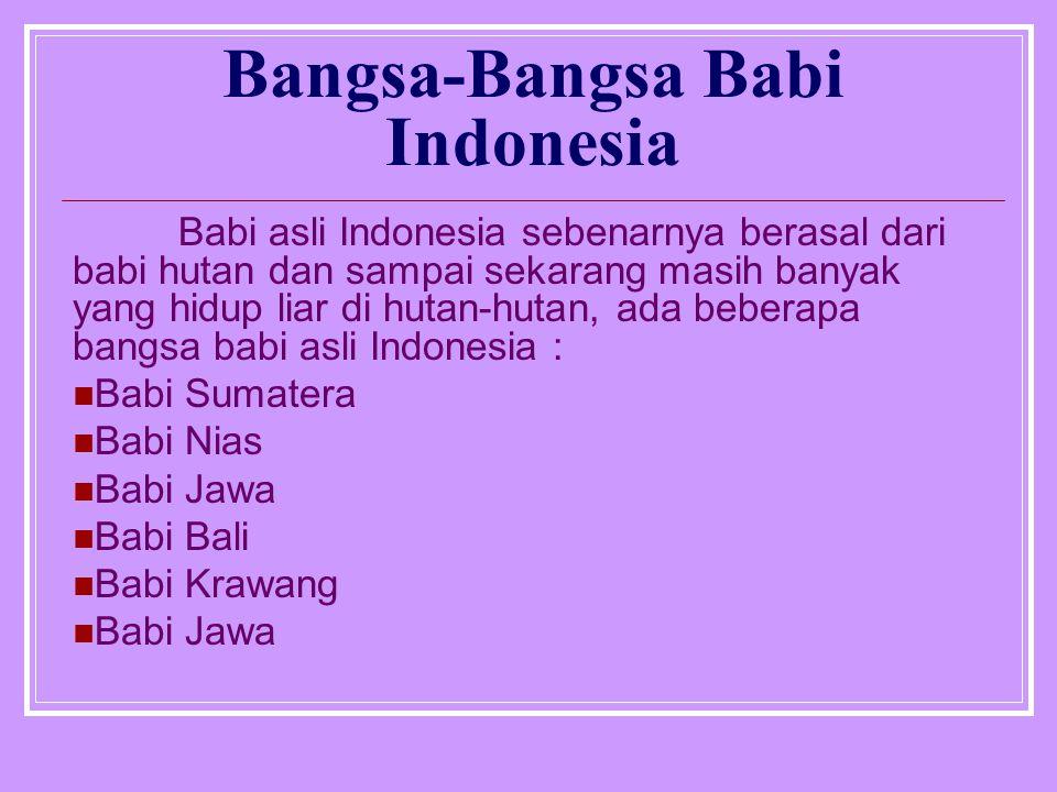 Bangsa-Bangsa Babi Indonesia