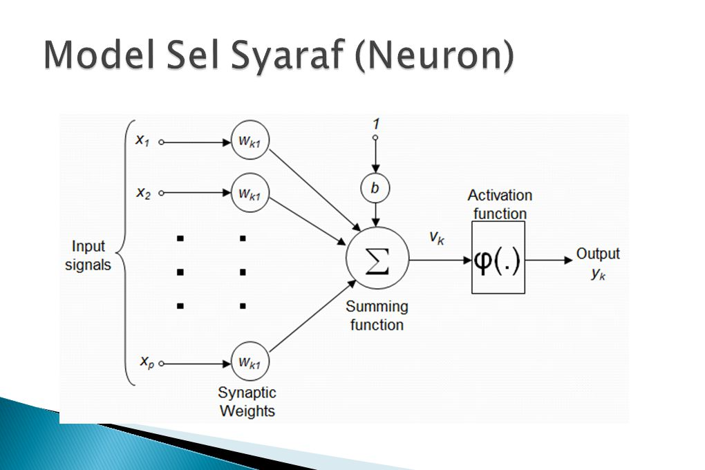 Model Sel Syaraf (Neuron)