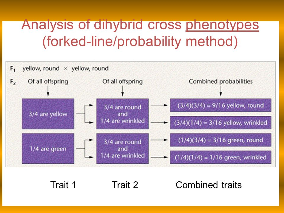 Analysis of dihybrid cross phenotypes (forked-line/probability method)