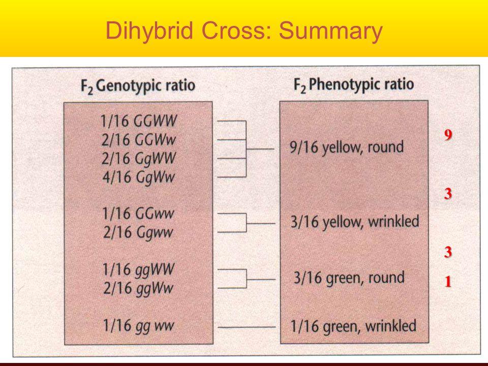 Dihybrid Cross: Summary