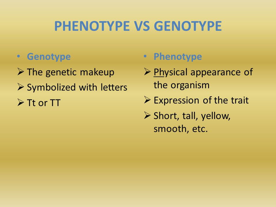 PHENOTYPE VS GENOTYPE Genotype The genetic makeup