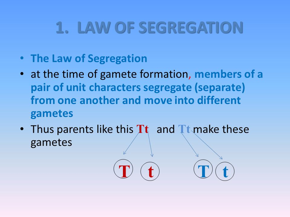 1. LAW OF SEGREGATION T t T t The Law of Segregation
