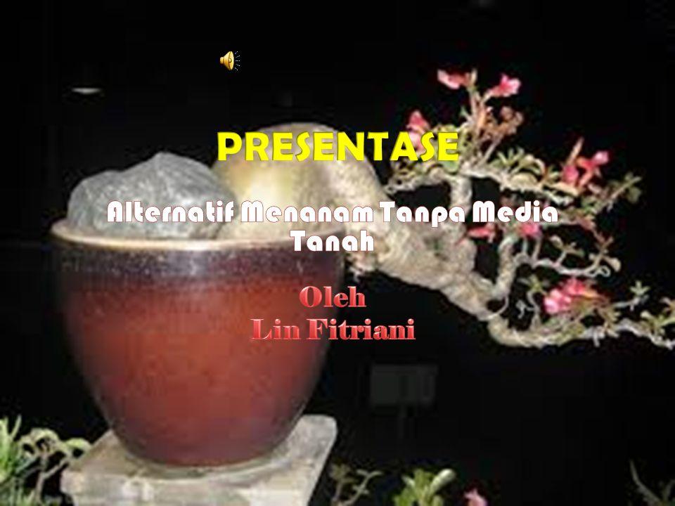 Alternatif Menanam Tanpa Media Tanah Oleh Lin Fitriani