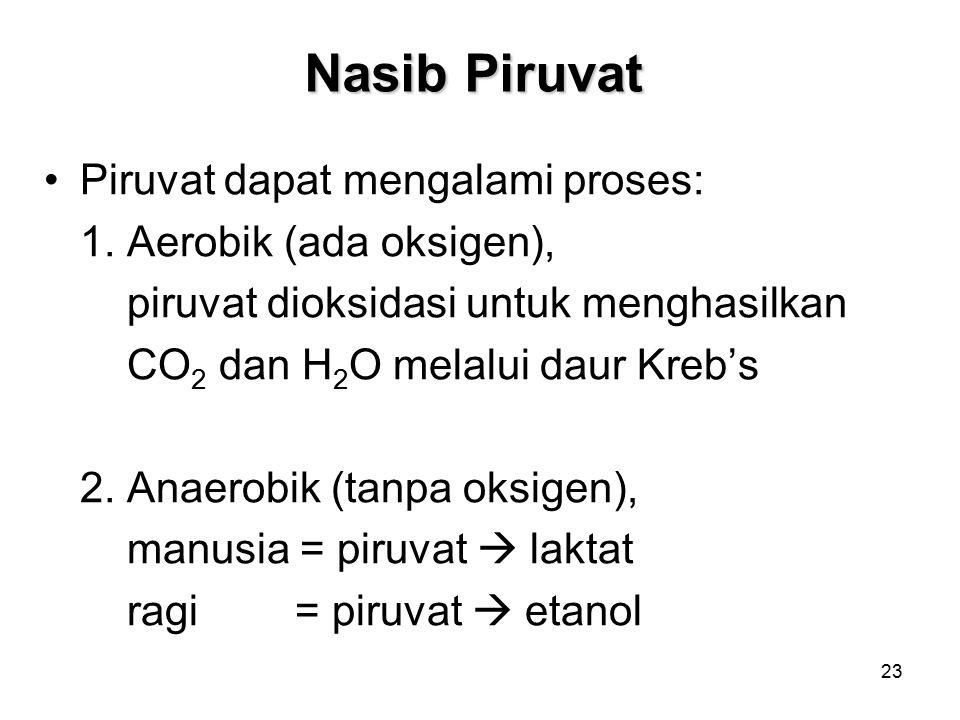 Nasib Piruvat Piruvat dapat mengalami proses: