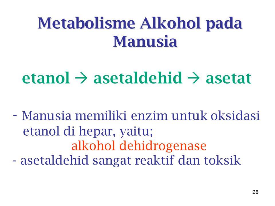 Metabolisme Alkohol pada Manusia