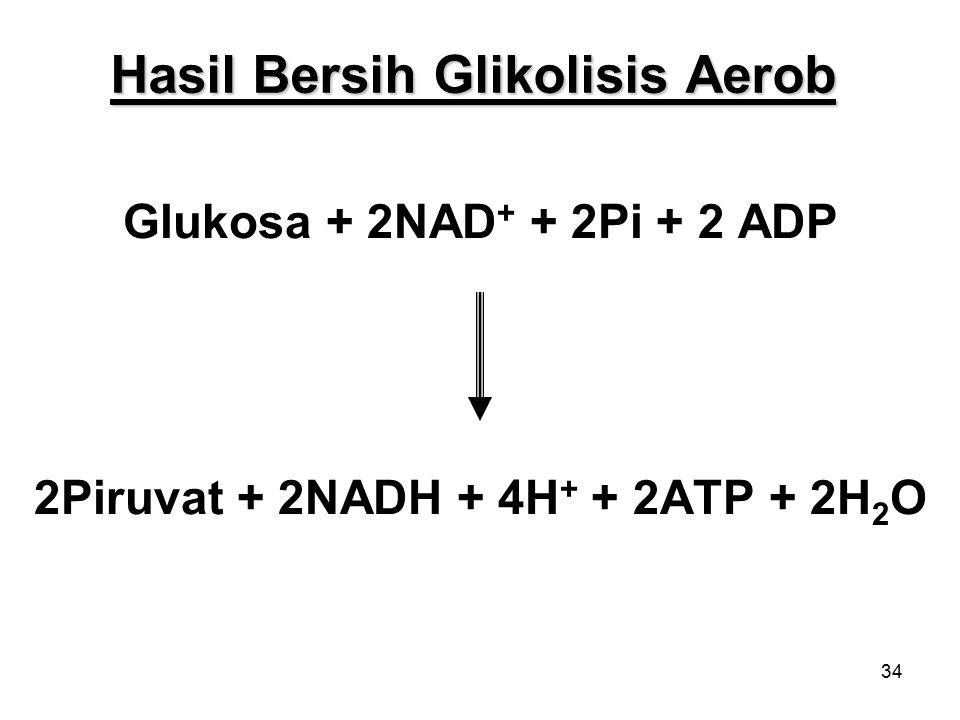 Hasil Bersih Glikolisis Aerob