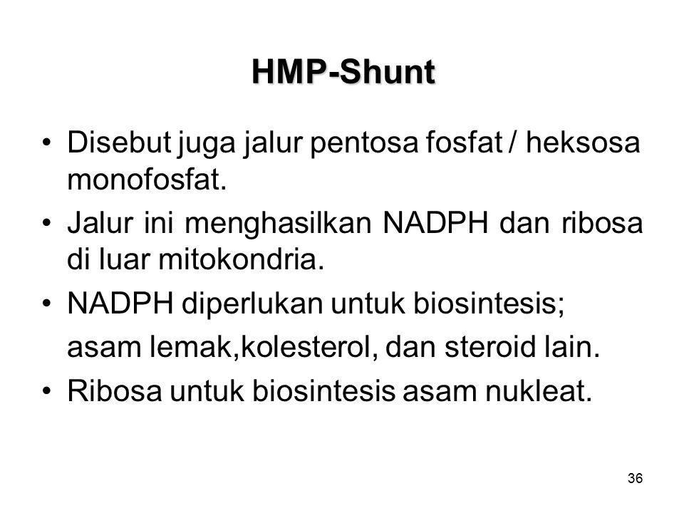 HMP-Shunt Disebut juga jalur pentosa fosfat / heksosa monofosfat.