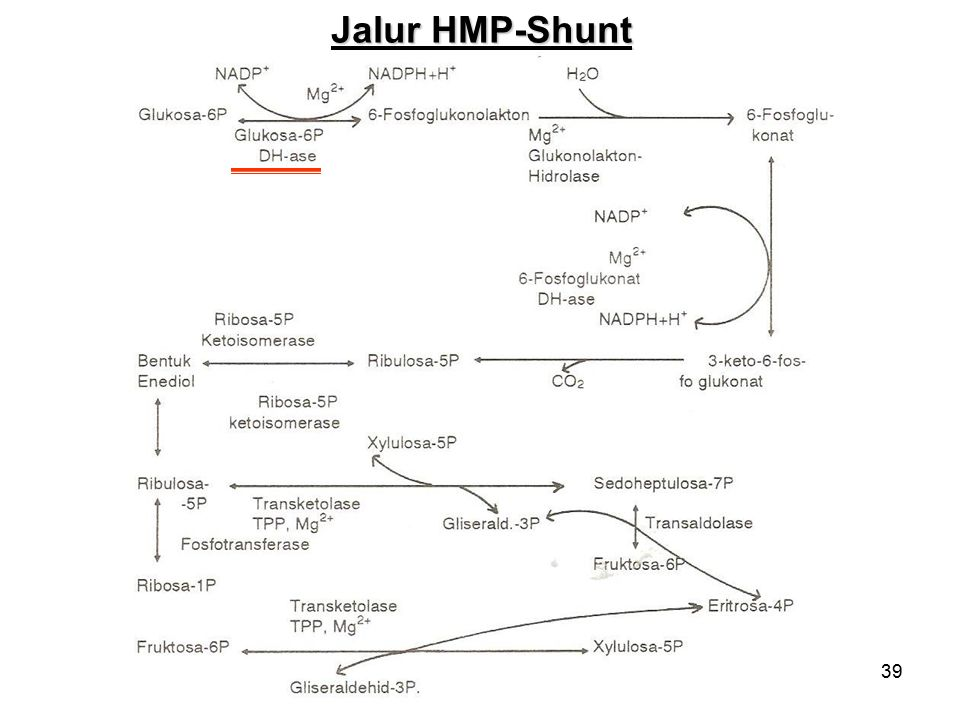 Jalur HMP-Shunt
