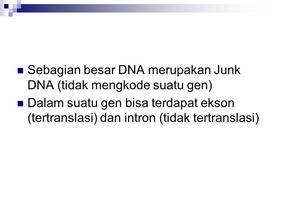 Sebagian besar DNA merupakan Junk DNA (tidak mengkode suatu gen)