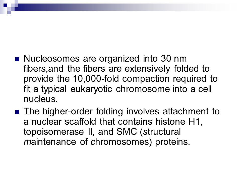 Nucleosomes are organized into 30 nm fibers,and the fibers are extensively folded to provide the 10,000-fold compaction required to fit a typical eukaryotic chromosome into a cell nucleus.