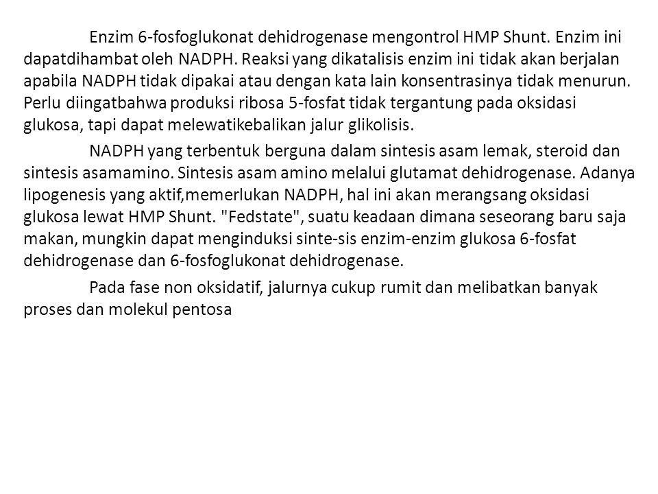 Enzim 6-fosfoglukonat dehidrogenase mengontrol HMP Shunt