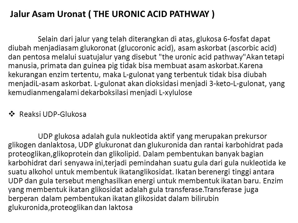Jalur Asam Uronat ( THE URONIC ACID PATHWAY )
