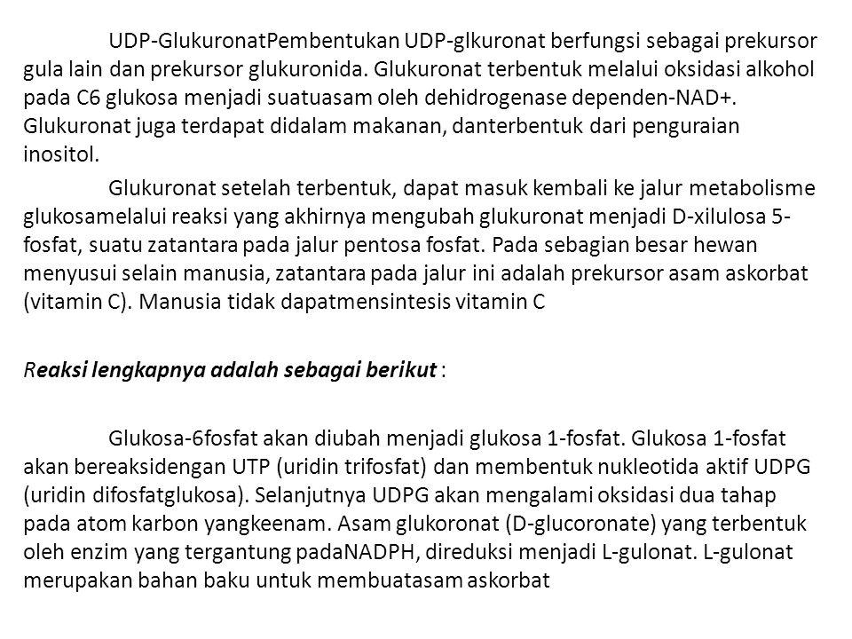 UDP-GlukuronatPembentukan UDP-glkuronat berfungsi sebagai prekursor gula lain dan prekursor glukuronida. Glukuronat terbentuk melalui oksidasi alkohol pada C6 glukosa menjadi suatuasam oleh dehidrogenase dependen-NAD+. Glukuronat juga terdapat didalam makanan, danterbentuk dari penguraian inositol.