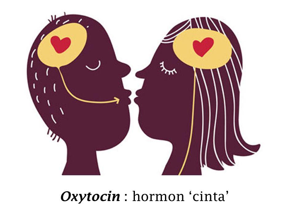 Oxytocin : hormon 'cinta'