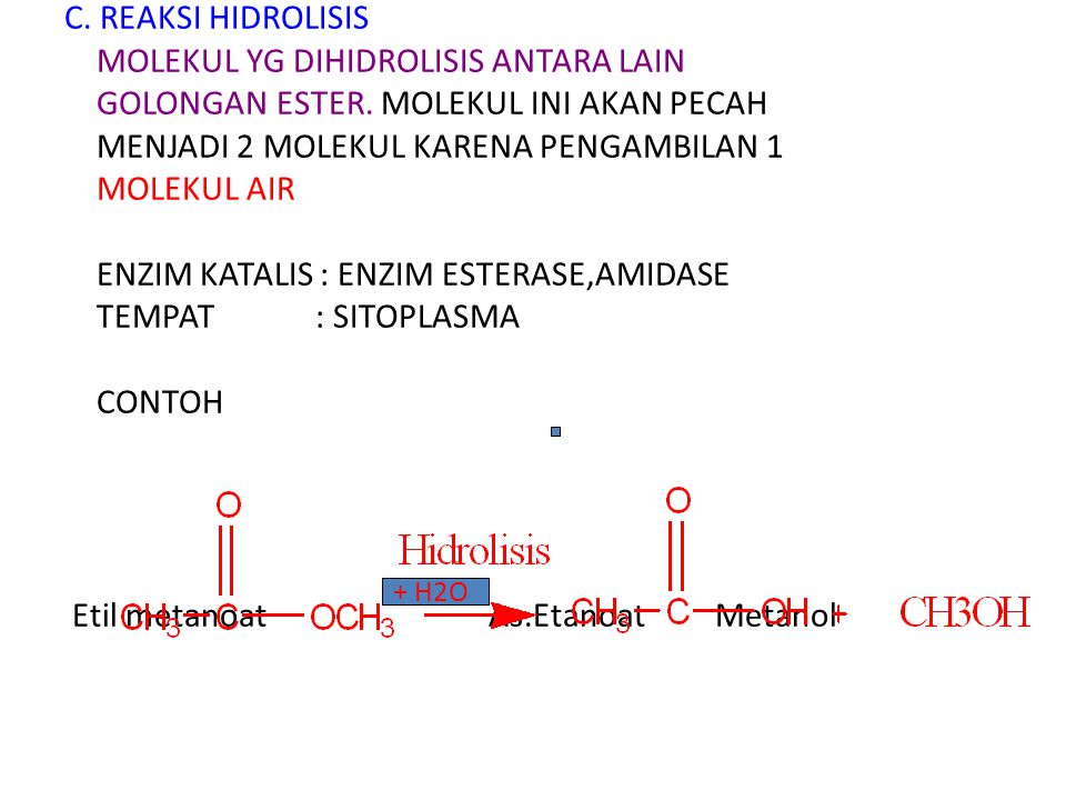 C. REAKSI HIDROLISIS MOLEKUL YG DIHIDROLISIS ANTARA LAIN GOLONGAN ESTER. MOLEKUL INI AKAN PECAH MENJADI 2 MOLEKUL KARENA PENGAMBILAN 1 MOLEKUL AIR ENZIM KATALIS : ENZIM ESTERASE,AMIDASE TEMPAT : SITOPLASMA CONTOH Etil metanoat As.Etanoat Metanol