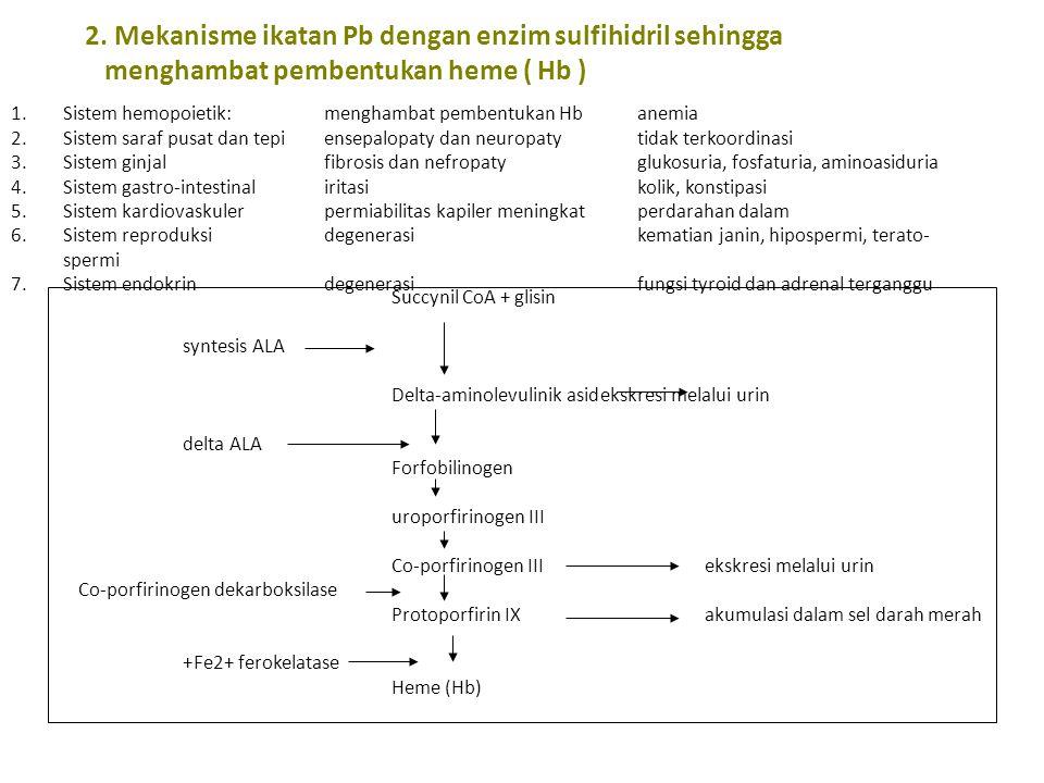 2. Mekanisme ikatan Pb dengan enzim sulfihidril sehingga menghambat pembentukan heme ( Hb )