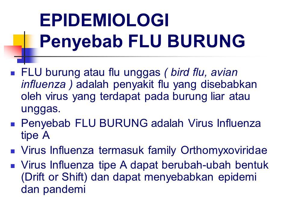 EPIDEMIOLOGI Penyebab FLU BURUNG