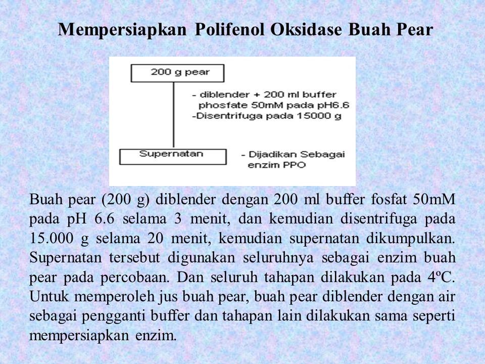 Mempersiapkan Polifenol Oksidase Buah Pear