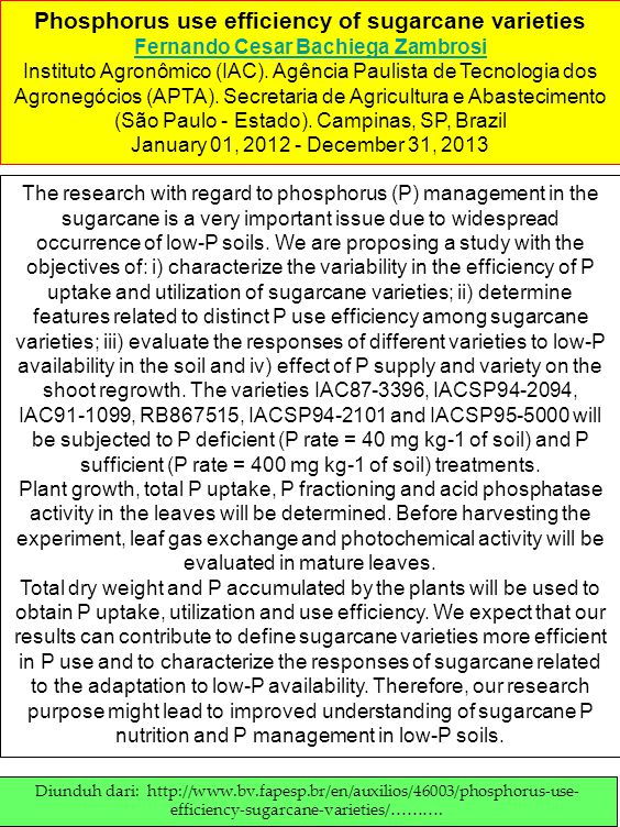 Phosphorus use efficiency of sugarcane varieties