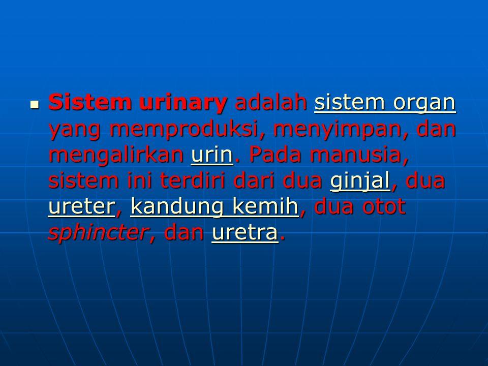 Sistem urinary adalah sistem organ yang memproduksi, menyimpan, dan mengalirkan urin.