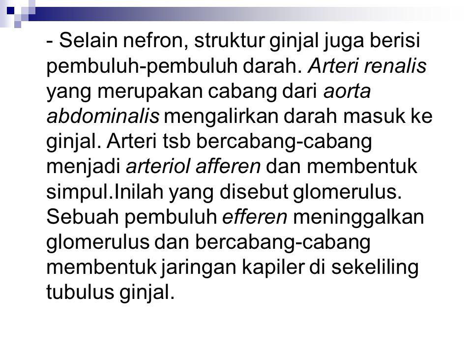 - Selain nefron, struktur ginjal juga berisi pembuluh-pembuluh darah