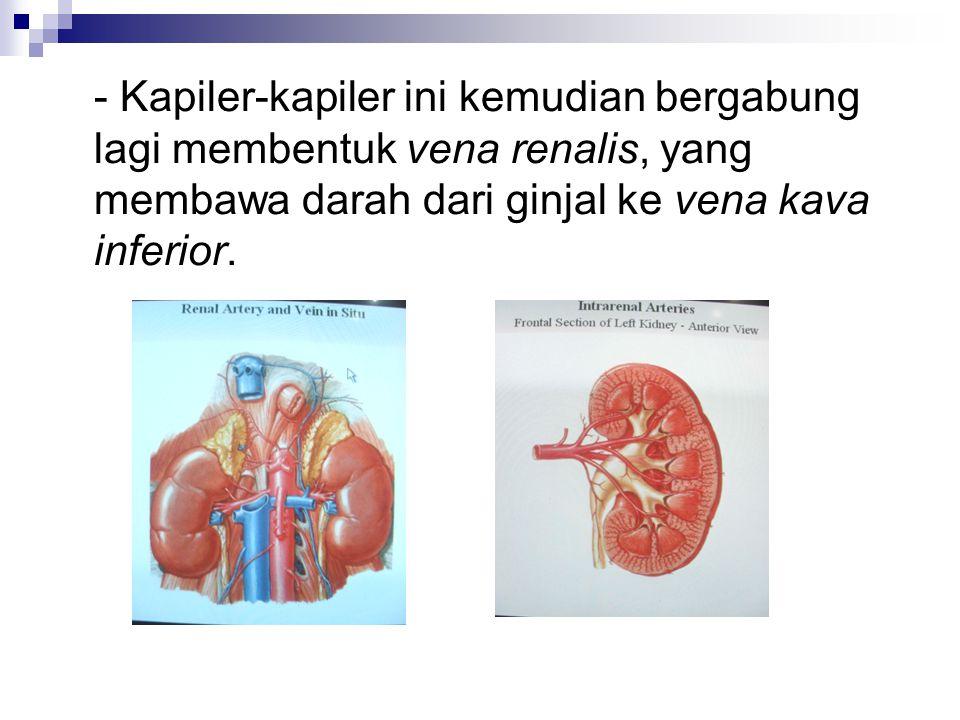 - Kapiler-kapiler ini kemudian bergabung lagi membentuk vena renalis, yang membawa darah dari ginjal ke vena kava inferior.