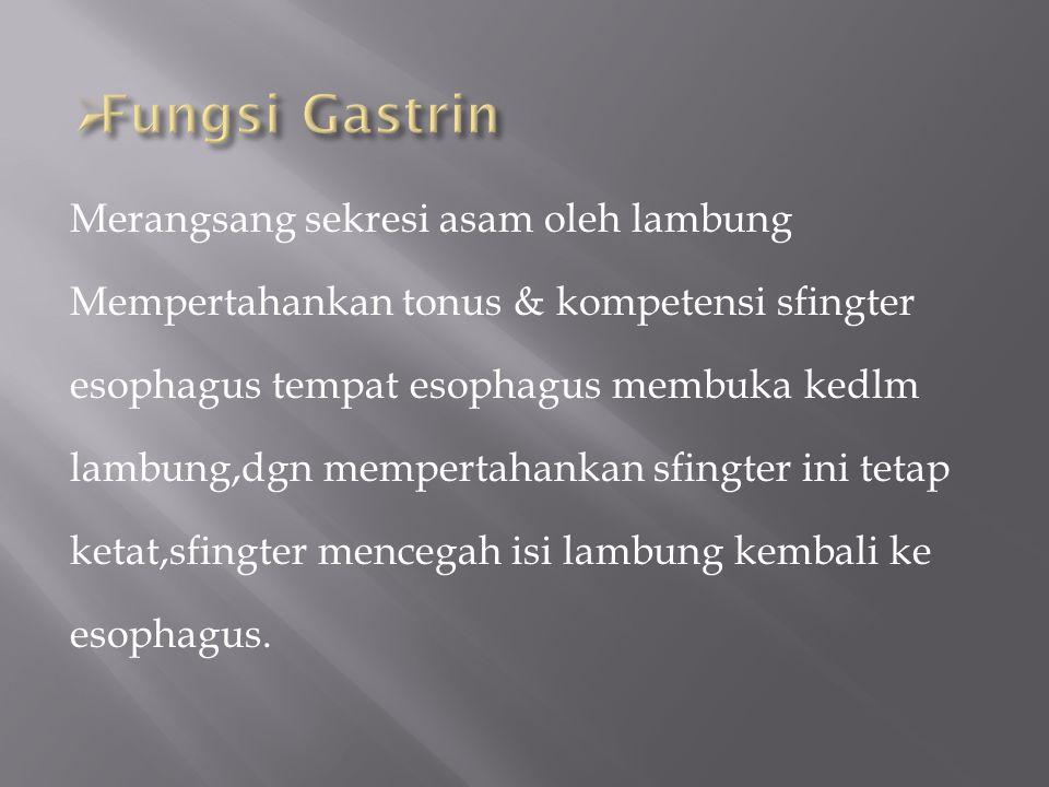 Fungsi Gastrin