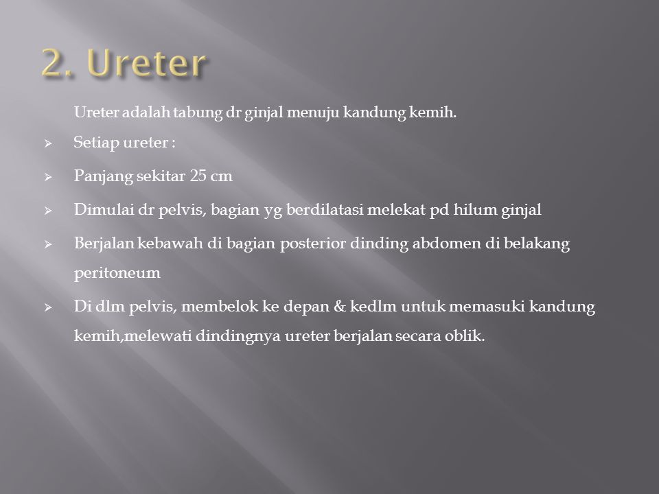 2. Ureter Setiap ureter : Panjang sekitar 25 cm
