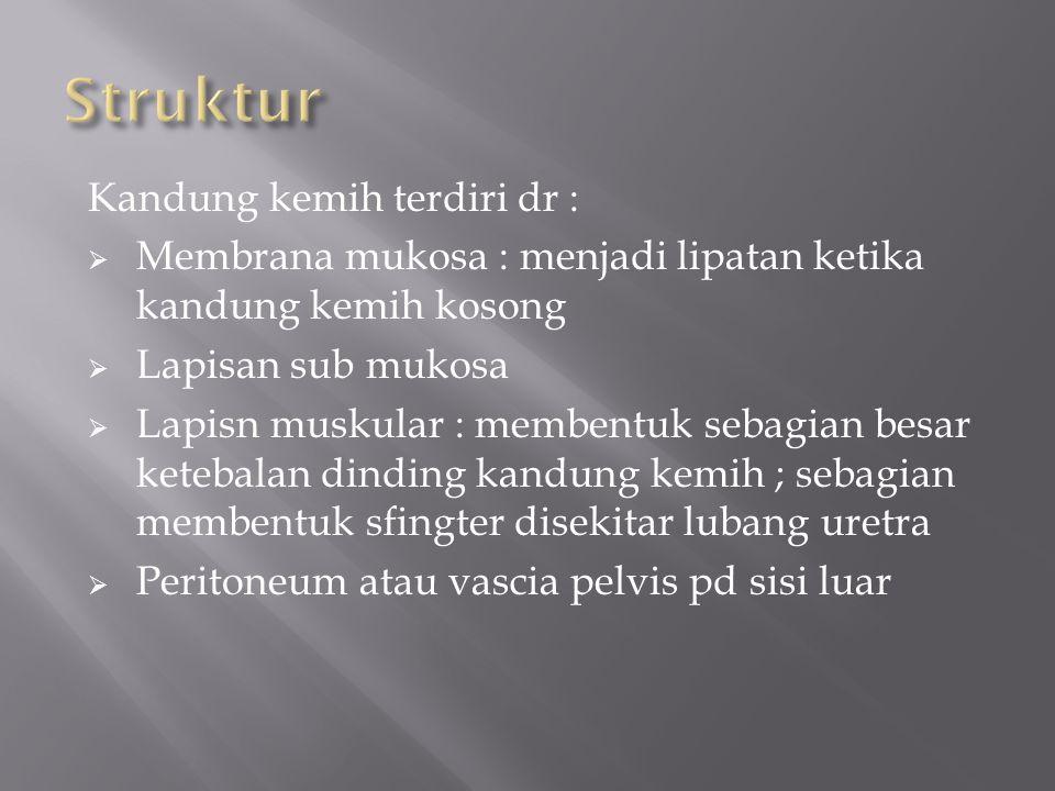 Struktur Kandung kemih terdiri dr :