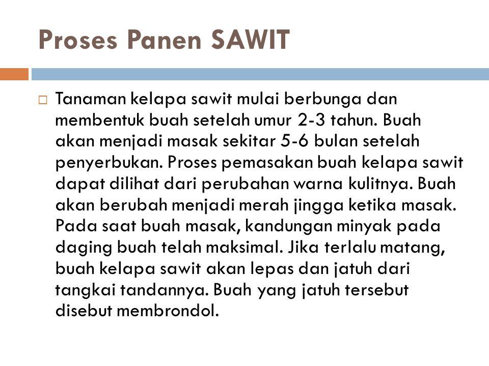 Proses Panen SAWIT