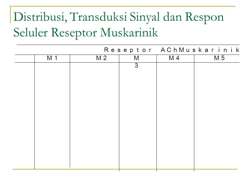 Distribusi, Transduksi Sinyal dan Respon Seluler Reseptor Muskarinik