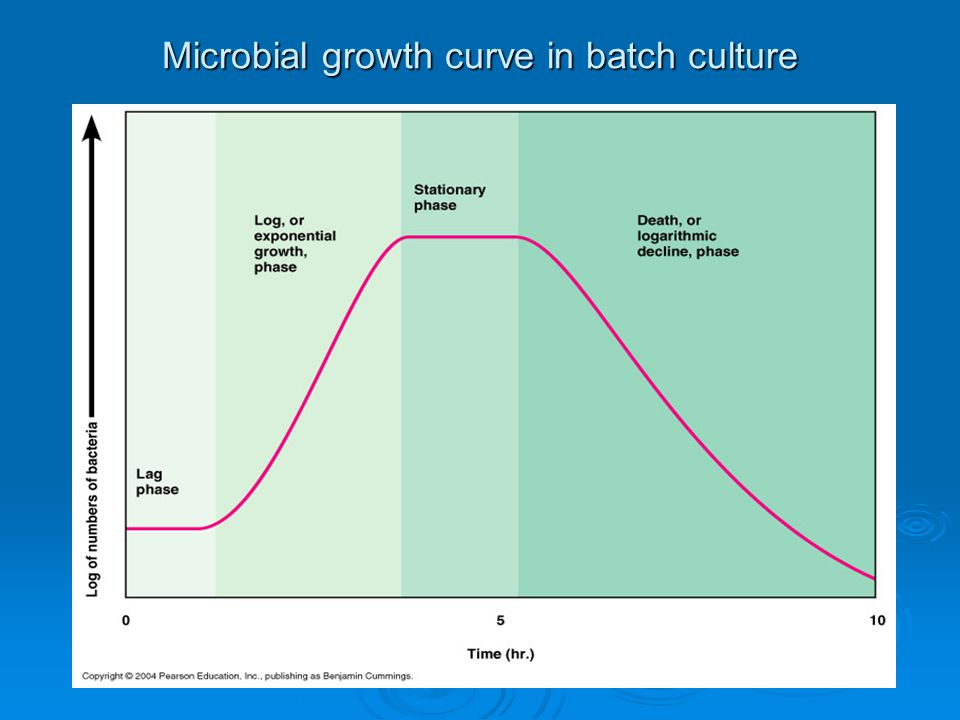 Microbial growth curve in batch culture