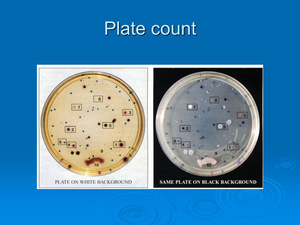 Plate count