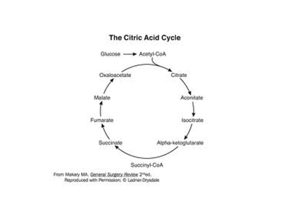 http://medicalmnemonics4u. blogspot. com/2009/11/citric-acid-cycle