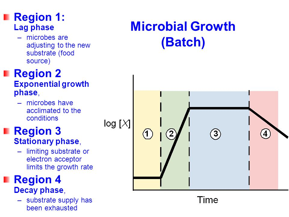 Microbial Growth (Batch)