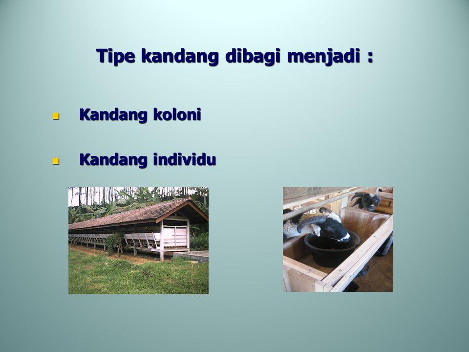 Tipe kandang dibagi menjadi :